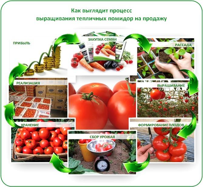 Бизнес план выращивание томатов 44