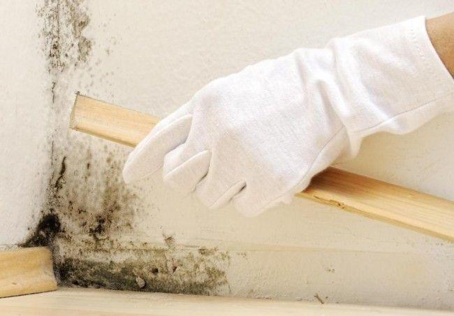 Причины появления сырости и плесени внутри дома