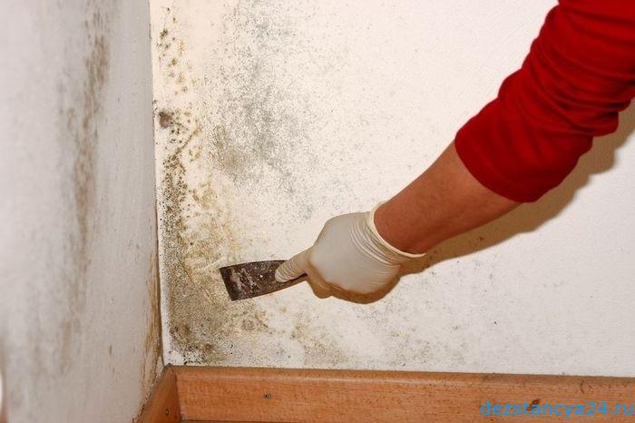 Чем обработать стены от плесени. Чем обработать стену от плесени и грибка? Эффективные средства в борьбе с плесенью и грибком